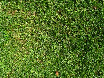 Plain Grass Area