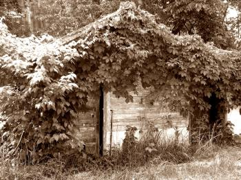 Plant covered shack