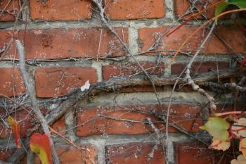 Plant on a brick wall