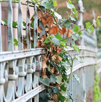 Plant on the Fence