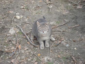 Playful street cat
