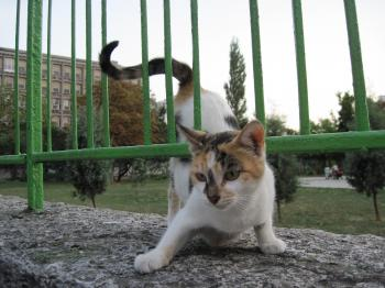Playful street cat