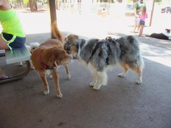 Playing at the bark park