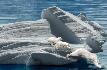 Polar Bears on the Iceberg