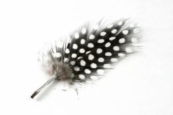 Polkadot Feather Close-up