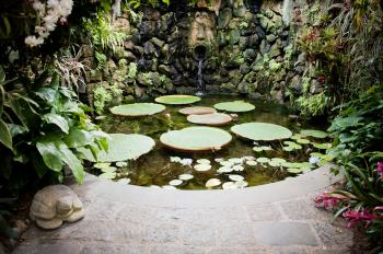 Pond with waterlillies