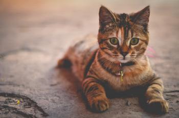 Pose Kitty