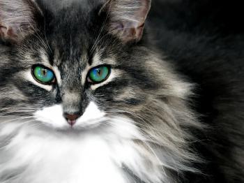 Pose of Cat