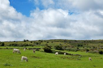 Poulnabrone Pasture