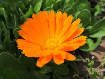 Pretty orange flower