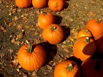 Pumpkin Smattering