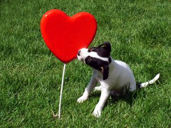 Puppy kissing a heart