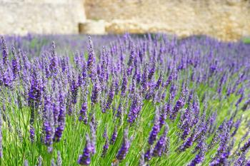 Purple Cluster Petaled Flower