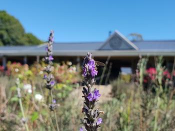 Purple flower in the garden