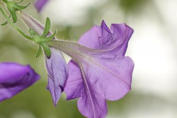 Purple Flower Selective Focus Photo