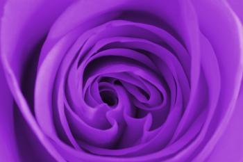 Purple Rose Centre