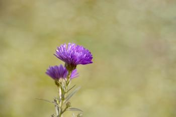 Purple Thistle Flower during Daytime