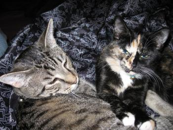 Radar and Harlequin lying together 1
