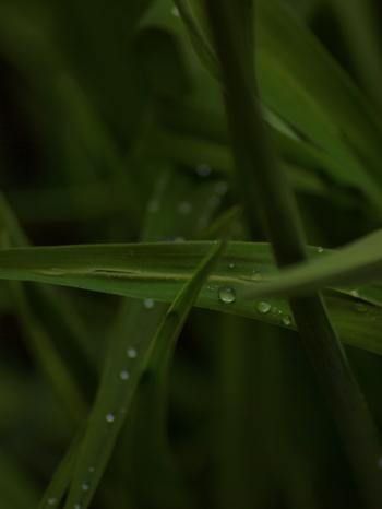 Raindrops on leafs