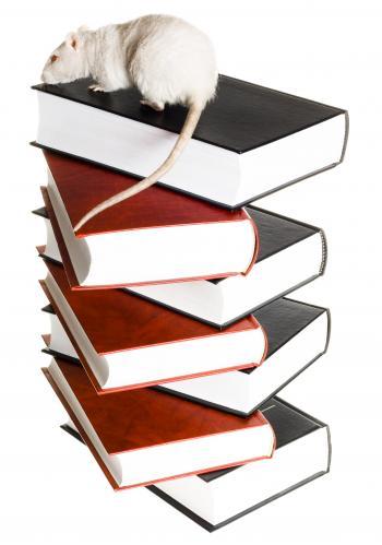 Rat & books
