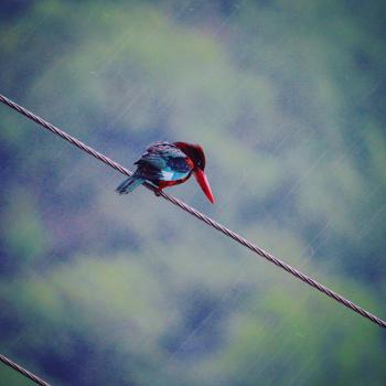 Red and Blue Bird on Gray Rope