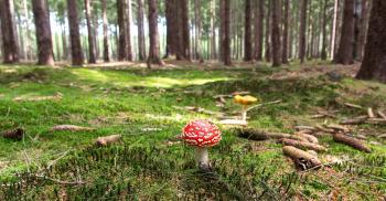 Red and White Mushroom Beside Yellow Mushroom Near Green Trees during Daytime