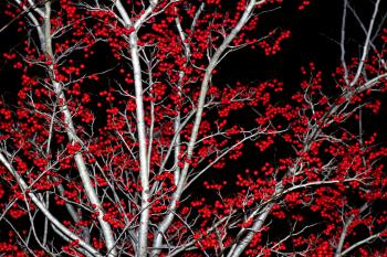 Red Ball Tree