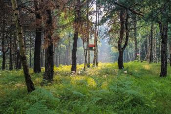 Red birdhouse in foggy, summer forest