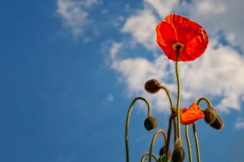 Red Flower during Daytime