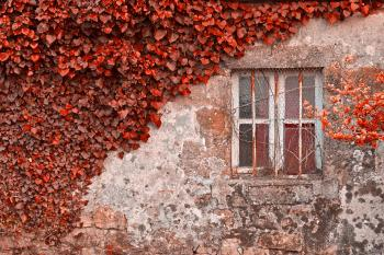 Red Ivy Wall - HDR
