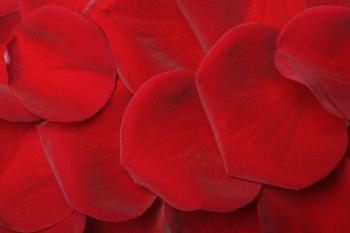 Red rose petals