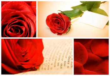 Red Roses Collage