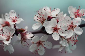 Red Springtime Blossom
