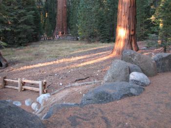 Redwood Meadow