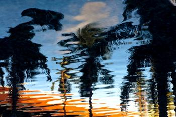 Reflection of Trees on Ripple Water