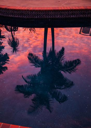 Reflection of Two Coconut Tree on Body of Water