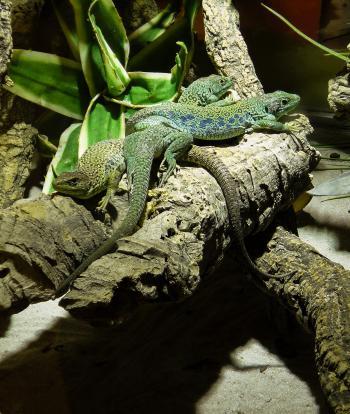 Reptiles in the Zoo