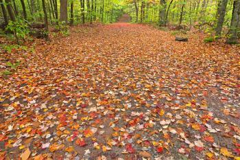 Ricketts Glen Fall Trail - HDR