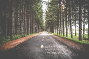 Road between the trees