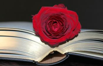 Rose in the Book