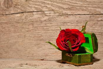 Rose in the Box