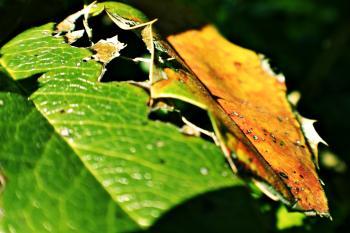 Rotten leaf