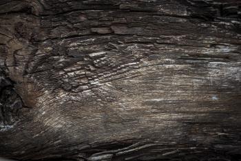 Rotten Wood Texture
