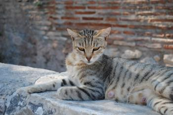 Royal egyptian cat laying on ruins