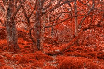 Ruby Moss Forest - HDR