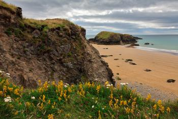 Rugged Irish Wildflower Coast - HDR