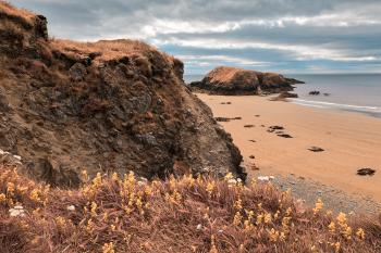 Rugged Irish Wildflower Coast - Pastel Fantasy HDR