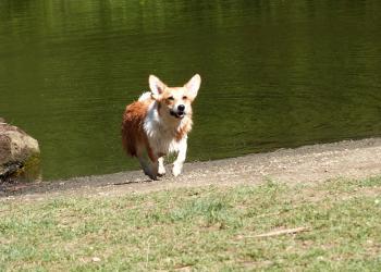 Run Sun run!