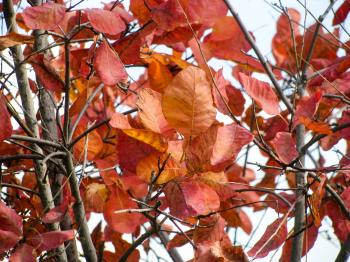 Rust Colored Tree Leaves on Branches