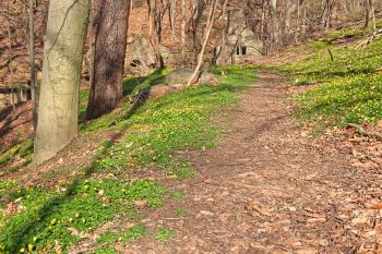 Rustic Spring Trail - HDR